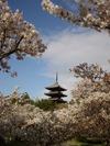 Kyoto6_1